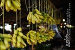 กล้วย แขวนไว้เป็นราวๆ เรียงเป็นหวีๆ ชอบหวีไหน หยิบได้เลย